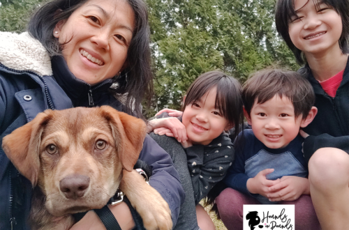 Foster puppy Cornbread with the Yippy Momma Rita and her kids